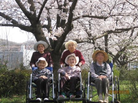 4月花見(桜)